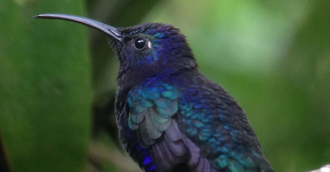 02-colibri-monteverde
